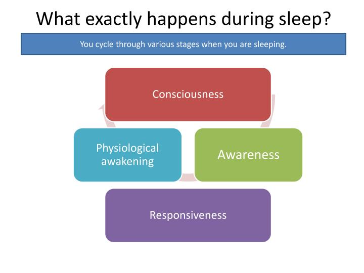 What exactly happens during sleep?