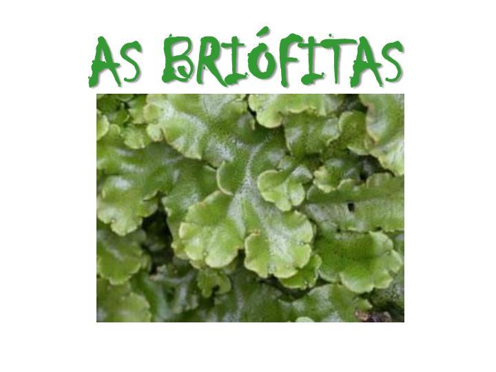 AS BRIFITAS