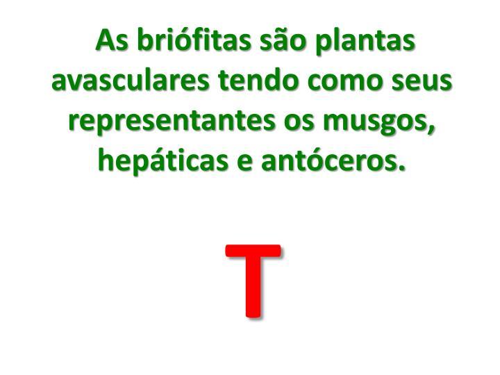 As briófitas são plantas avasculares tendo como seus representantes os musgos, hepáticas e antóceros.