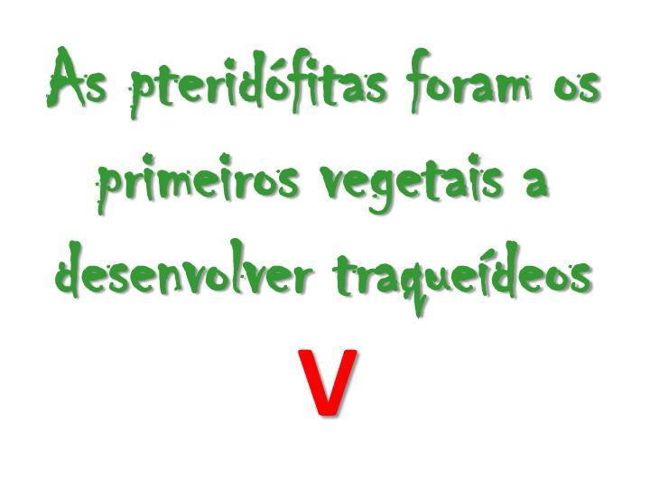 As pteridfitas foram os primeiros vegetais a desenvolver traquedeos