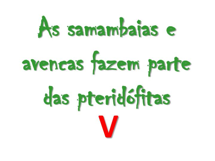 As samambaias e avencas fazem parte das pteridfitas