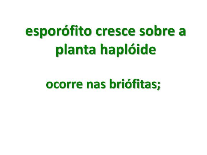 esporófito cresce sobre a planta haplóide