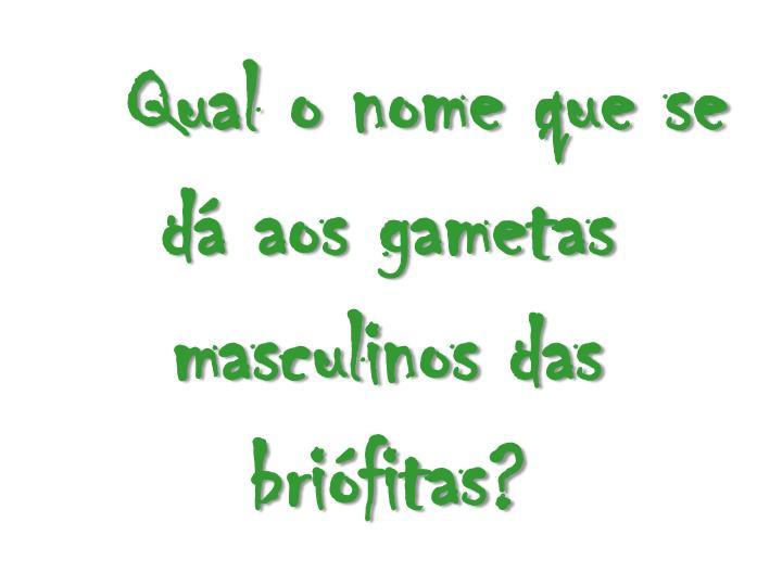 Qual o nome que se d aos gametas masculinos das brifitas?