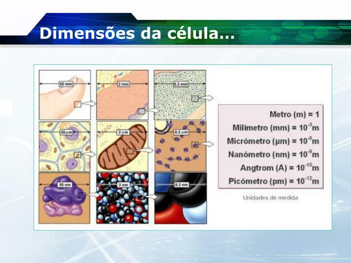 Dimensões da célula…