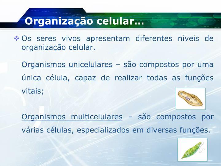 Organização celular…