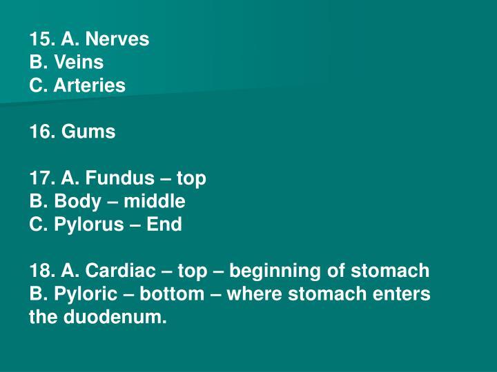 15. A. Nerves