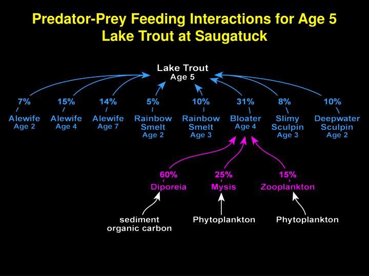 Predator-Prey Feeding Interactions for Age 5 Lake Trout at Saugatuck