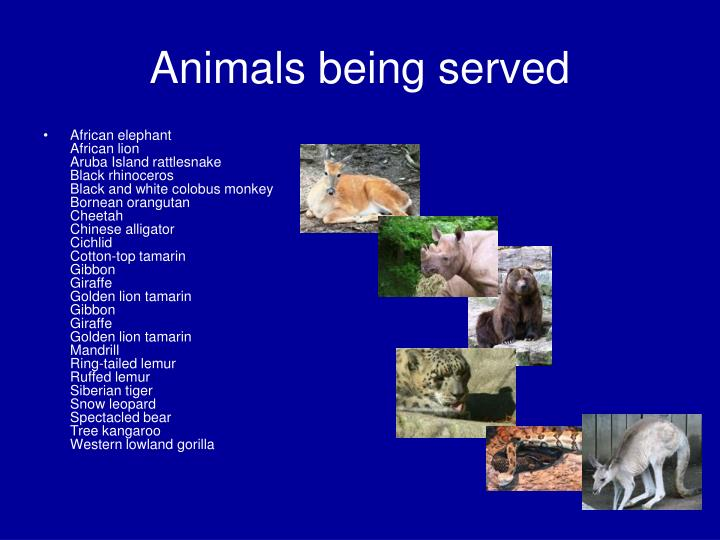 Animals being served