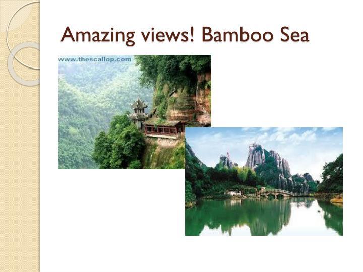 Amazing views! Bamboo Sea