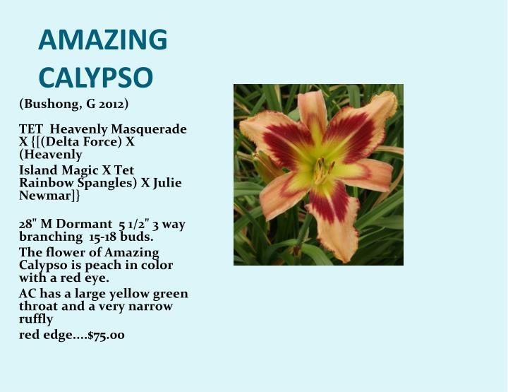 AMAZING CALYPSO