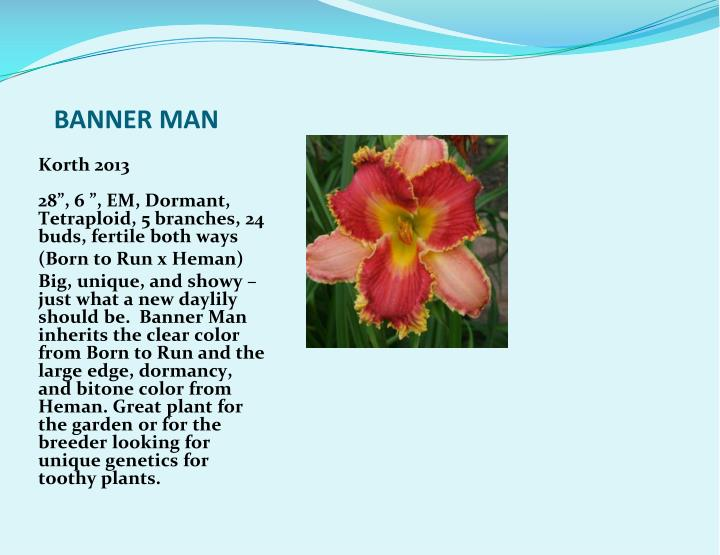 BANNER MAN