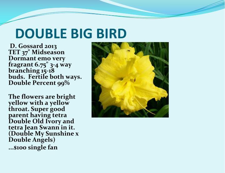 DOUBLE BIG BIRD