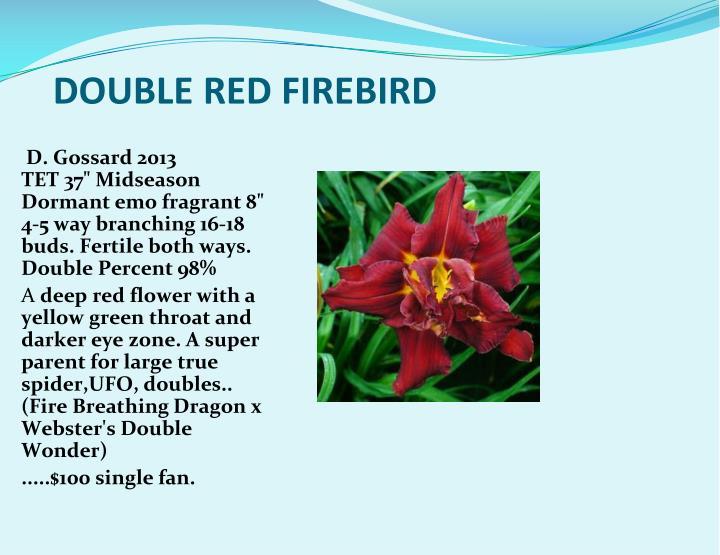 DOUBLE RED FIREBIRD