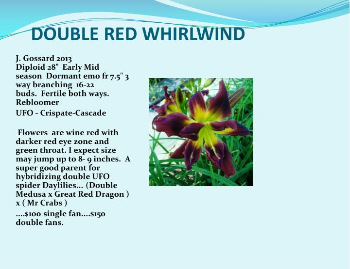 DOUBLE RED WHIRLWIND