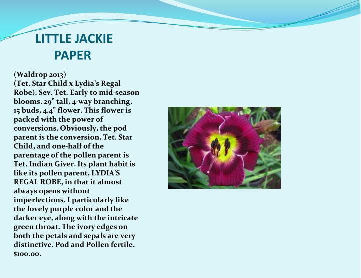 LITTLE JACKIE PAPER