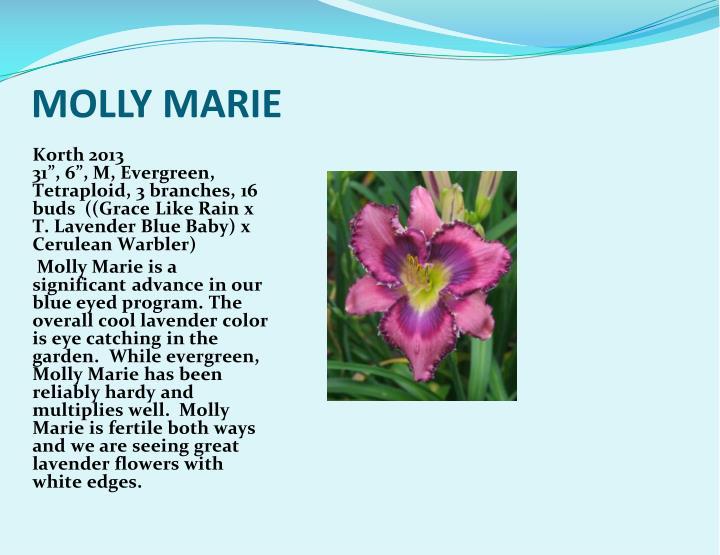 MOLLY MARIE