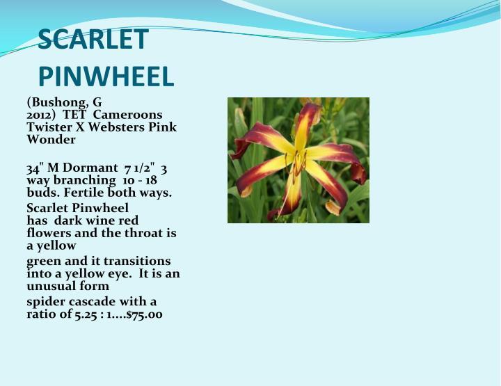 SCARLET PINWHEEL