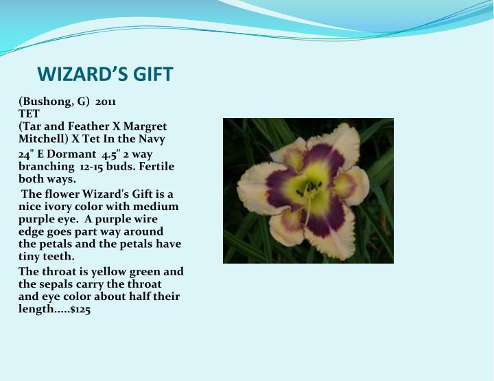 WIZARD'S GIFT