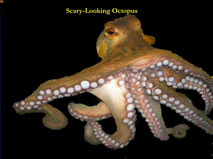 Scary-Looking Octopus