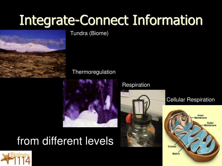 Integrate-Connect Information