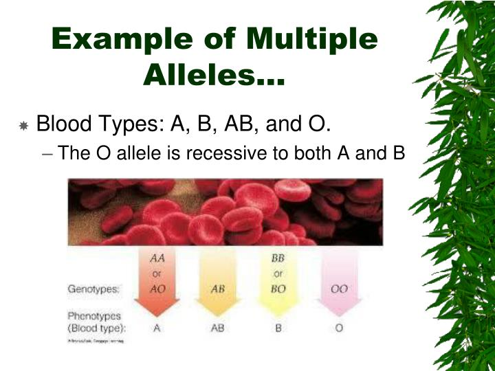 Example of Multiple Alleles…