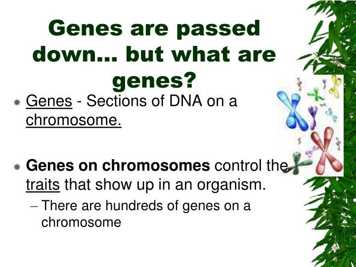 Genes are passed down… but what are genes?