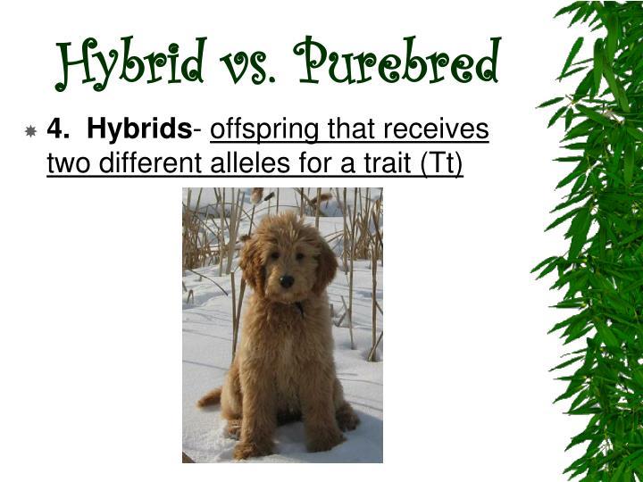 Hybrid vs. Purebred