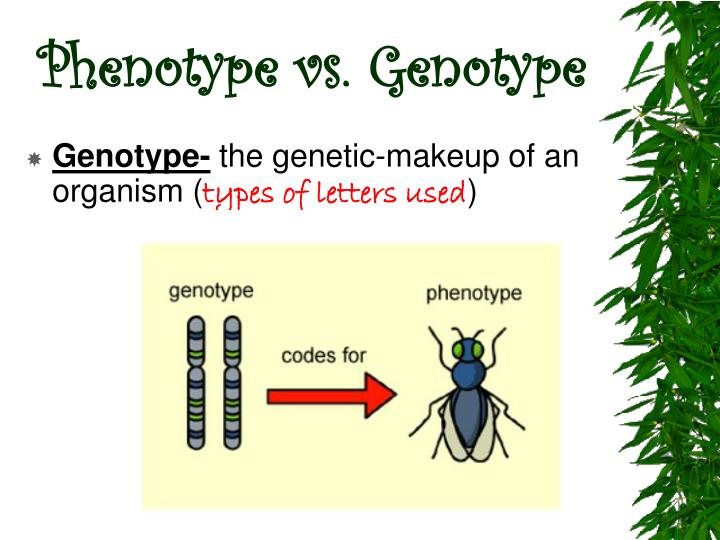 Phenotype vs. Genotype