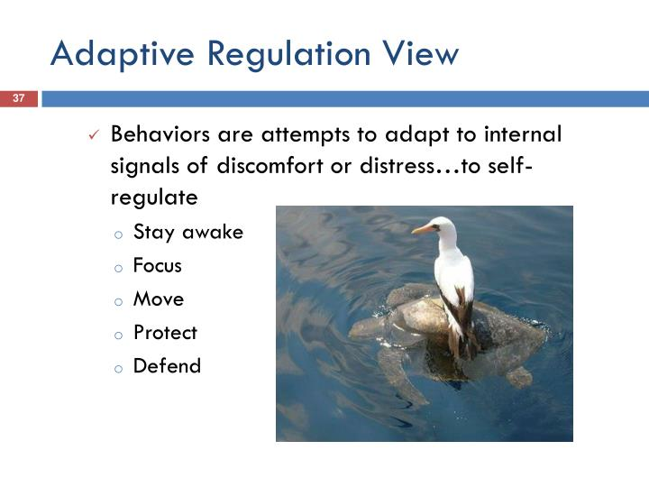 Adaptive Regulation View