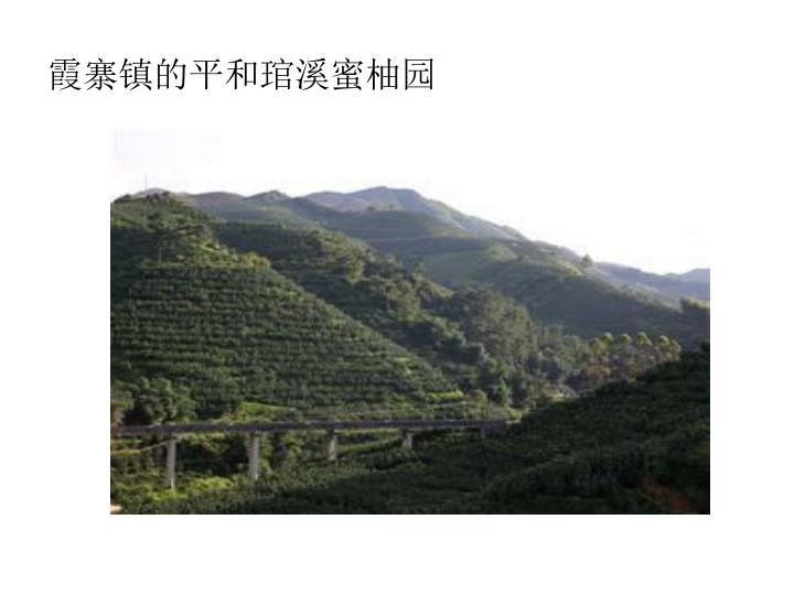霞寨镇的平和琯溪蜜柚园