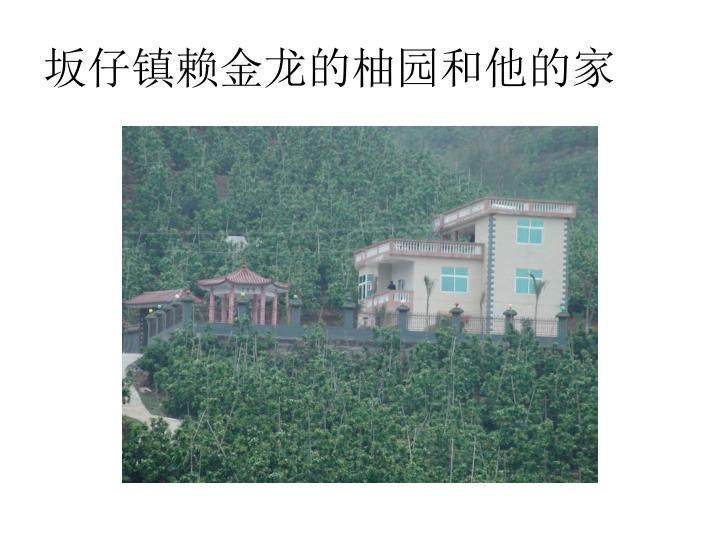 坂仔镇赖金龙的柚园和他的家