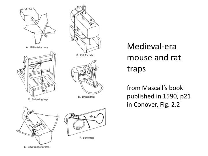 Medieval-era mouse and rat traps
