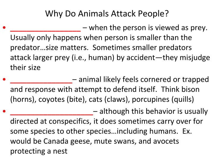 Why Do Animals Attack People?