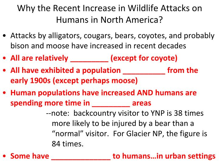 Why the Recent Increase in Wildlife Attacks on Humans in North America?