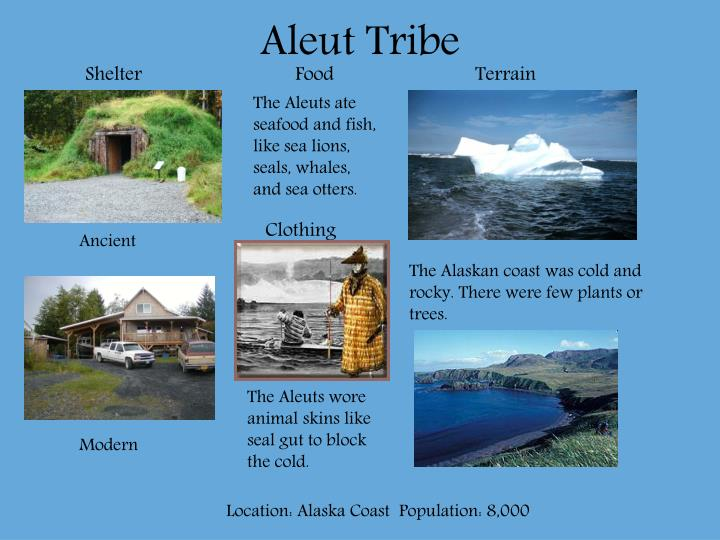 PPT - Aleut Tribe PowerPoint Presentation - ID:5448075