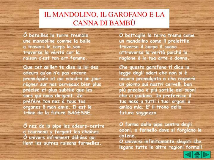 IL MANDOLINO, IL GAROFANO E LA CANNA DI BAMBÙ