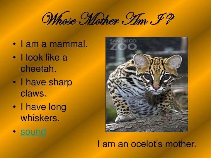 I am a mammal.