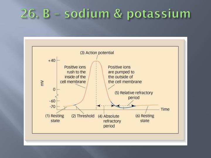 26. B – sodium & potassium