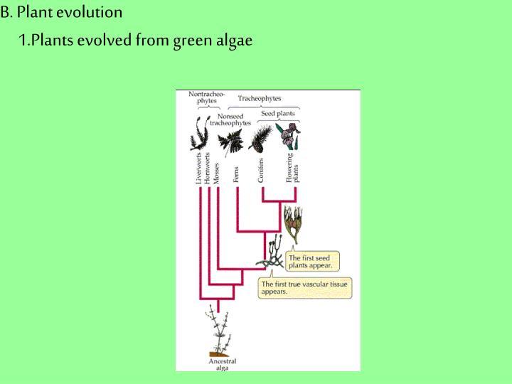 B. Plant evolution
