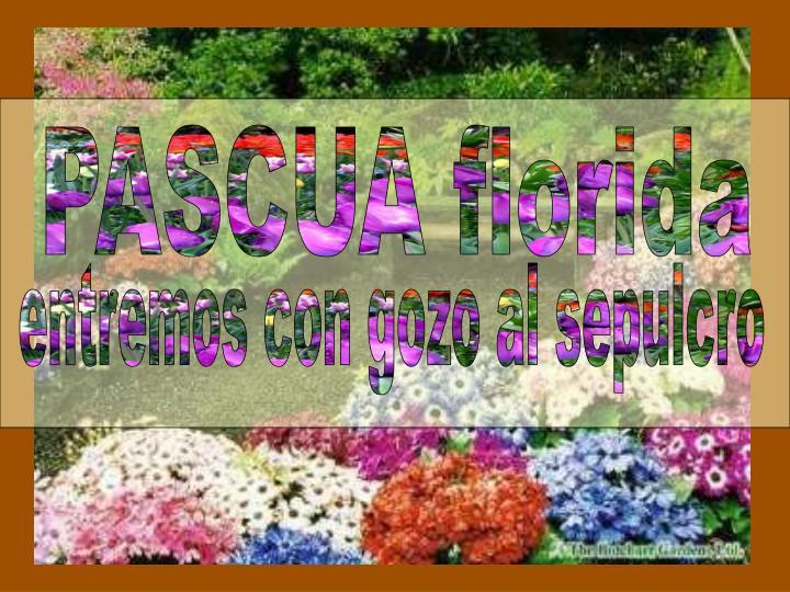 PASCUA florida