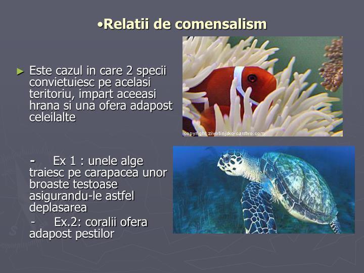 Relatii de comensalism