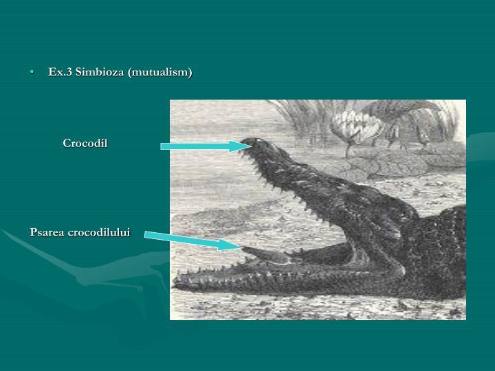 Ex.3 Simbioza (mutualism)