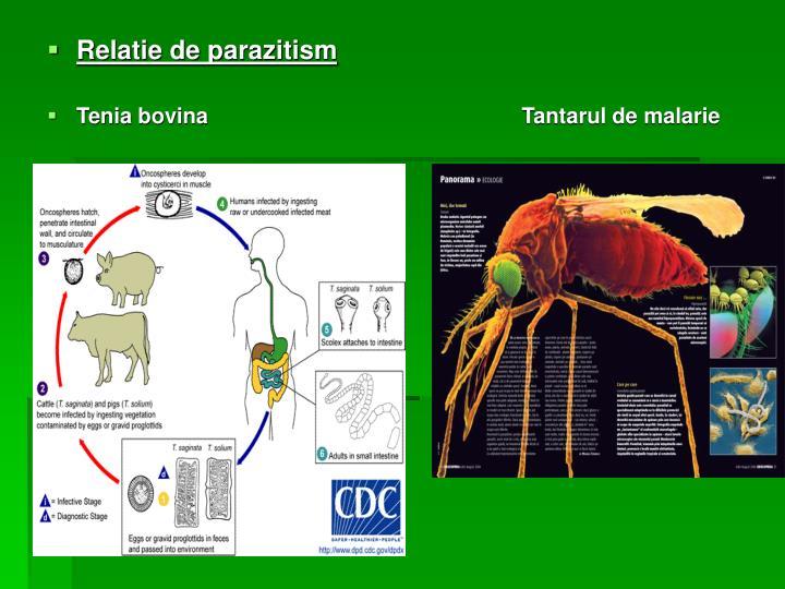 Relatie de parazitism