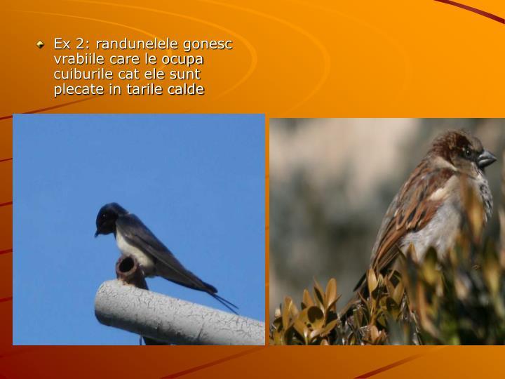 Ex 2: randunelele gonesc vrabiile care le ocupa cuiburile cat ele sunt plecate in tarile calde