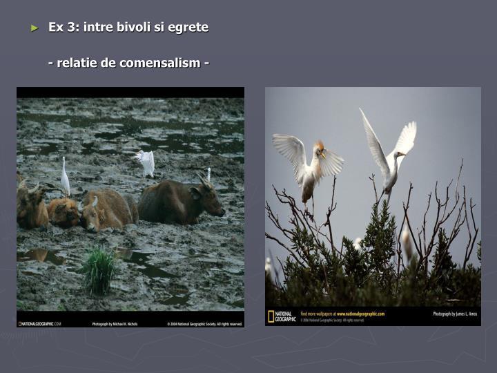 Ex 3: intre bivoli si egrete