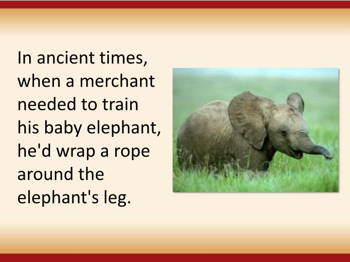 In ancient times, when a merchant needed to train his baby elephant, he'd wrap a rope around the elephant's leg.