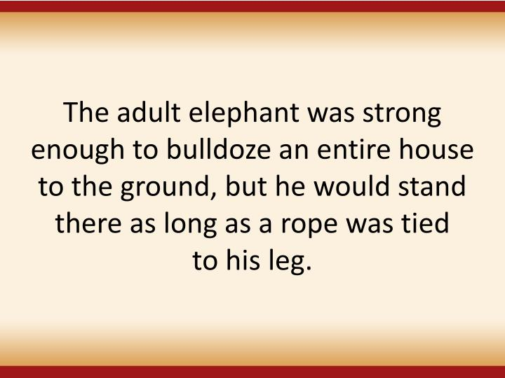 The adult elephant was strong enough to bulldoze an entire house to the ground, but he would stand there as long as a rope was tied