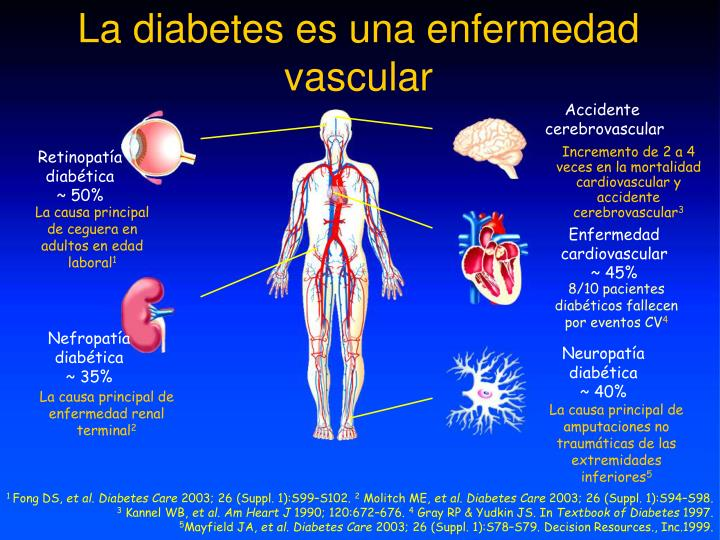 La diabetes es una enfermedad vascular