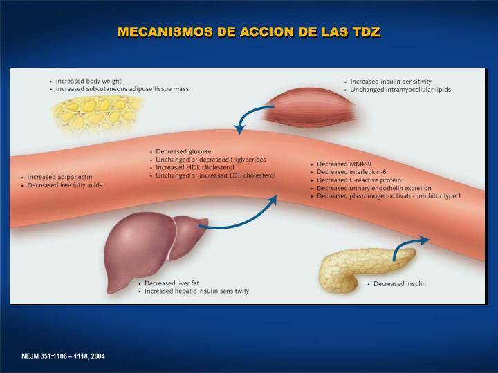 MECANISMOS DE ACCION DE LAS TDZ