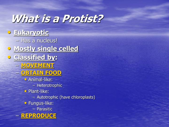 What is a Protist?